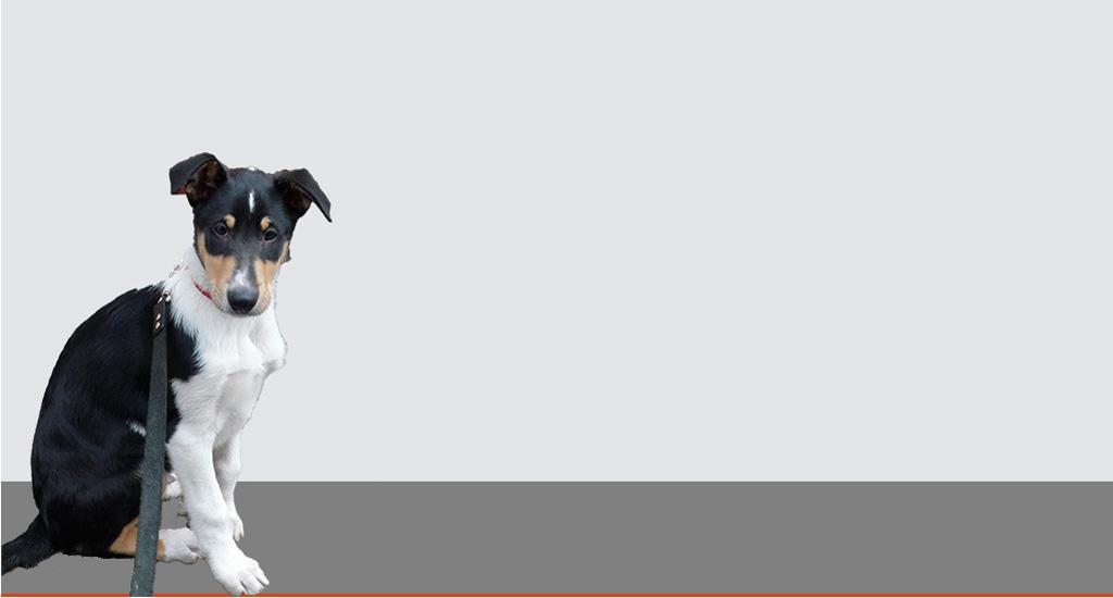 Diabell Diabetikerhunde
